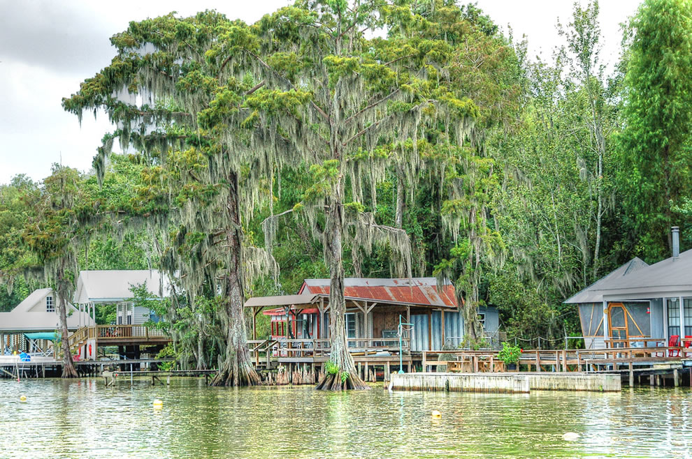Camps on on Belle River. The Cypress trees and the Spanish Moss are magnificent