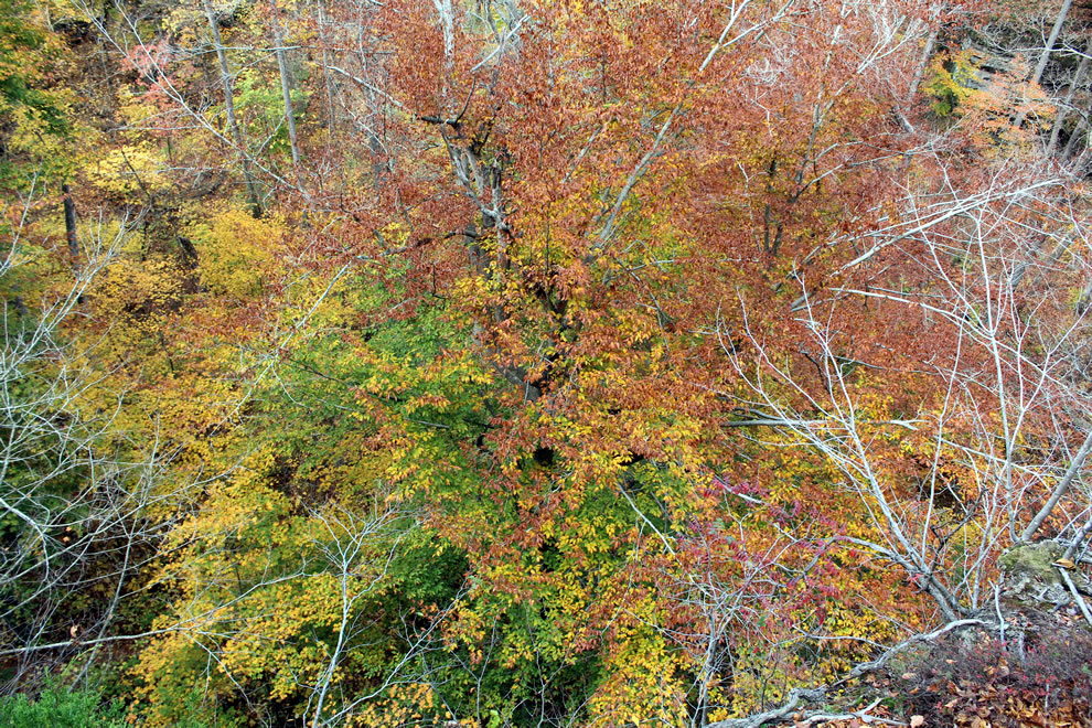 Climbing high above Pounds Hollow forest in October