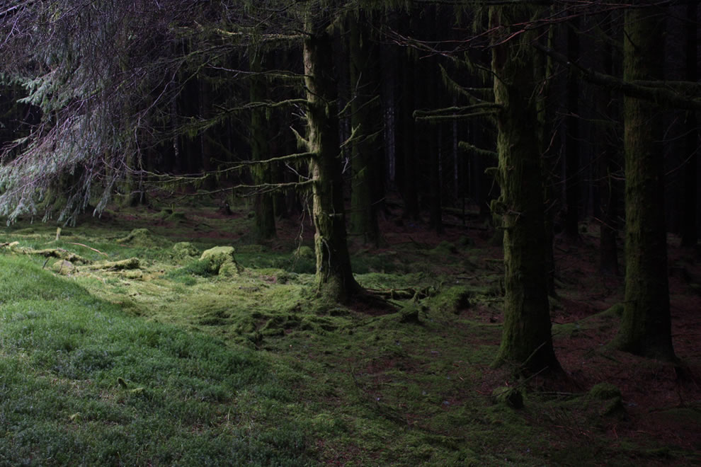 Dark forest in Wales