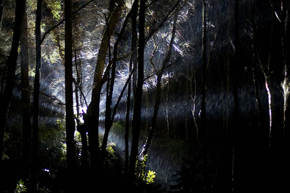 Enchanted forest or UFO in the woods of Scotland