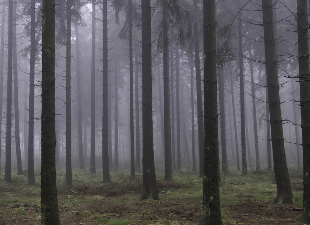 Foggy woods -- Can you feel the silence between the trees