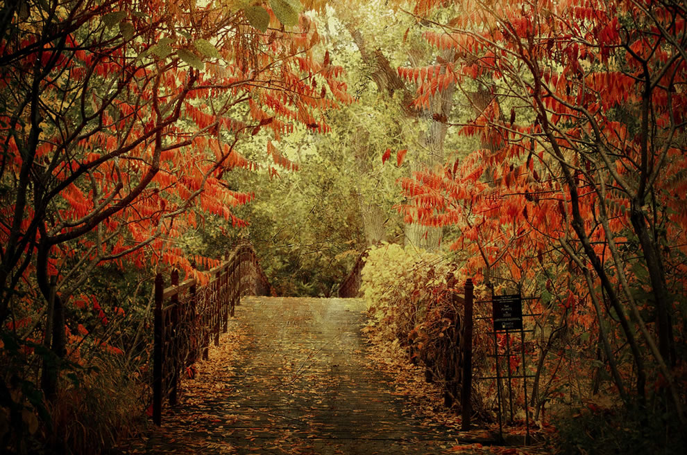 Forlorn Bridge during fall