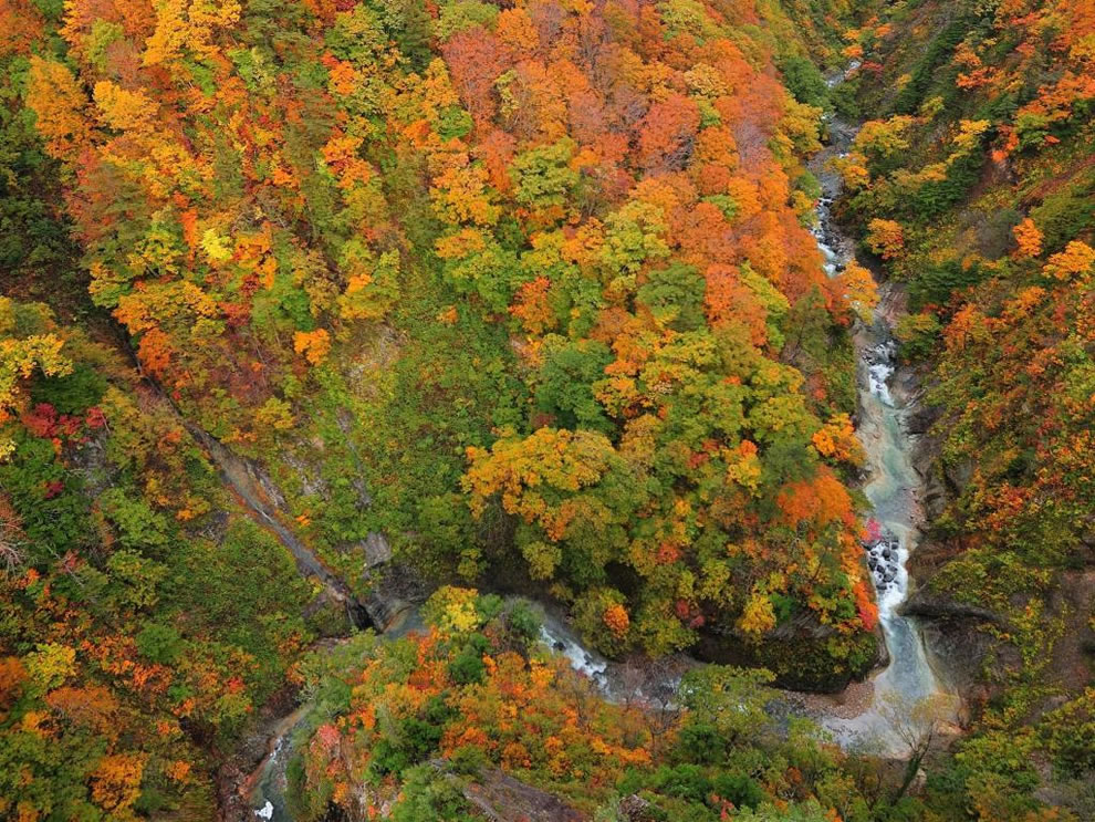 From above, looking at fall forest and creeks