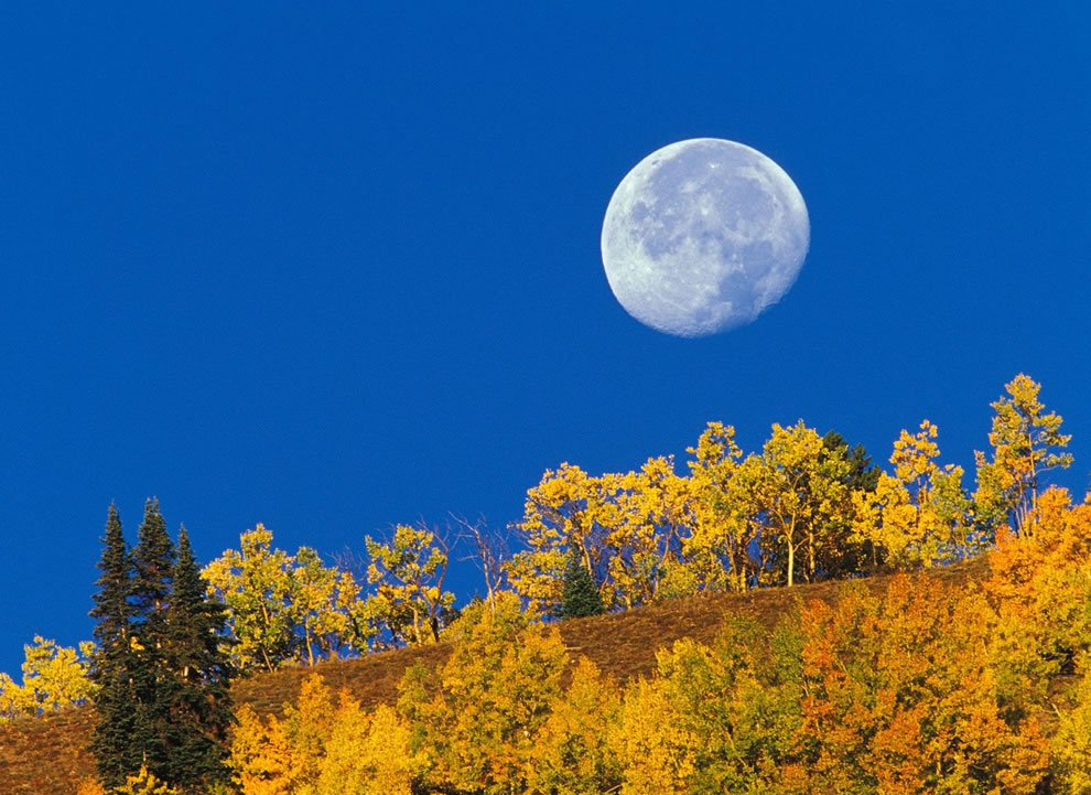 Full moon and forest foliage in fall season