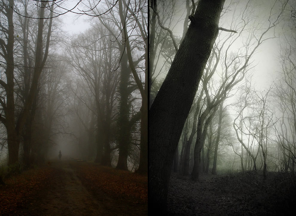 Ghost rider in the mist &amp; Grandma&#039;s Old Forest in Holland