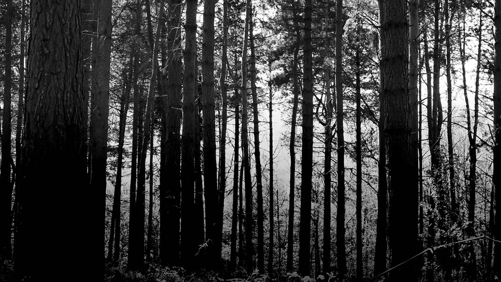 Haunted woods, taken at Hoar Cross National Forest, Leicestershire