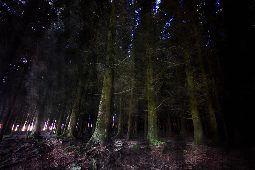 If you go down to the woods today...Holga, UK