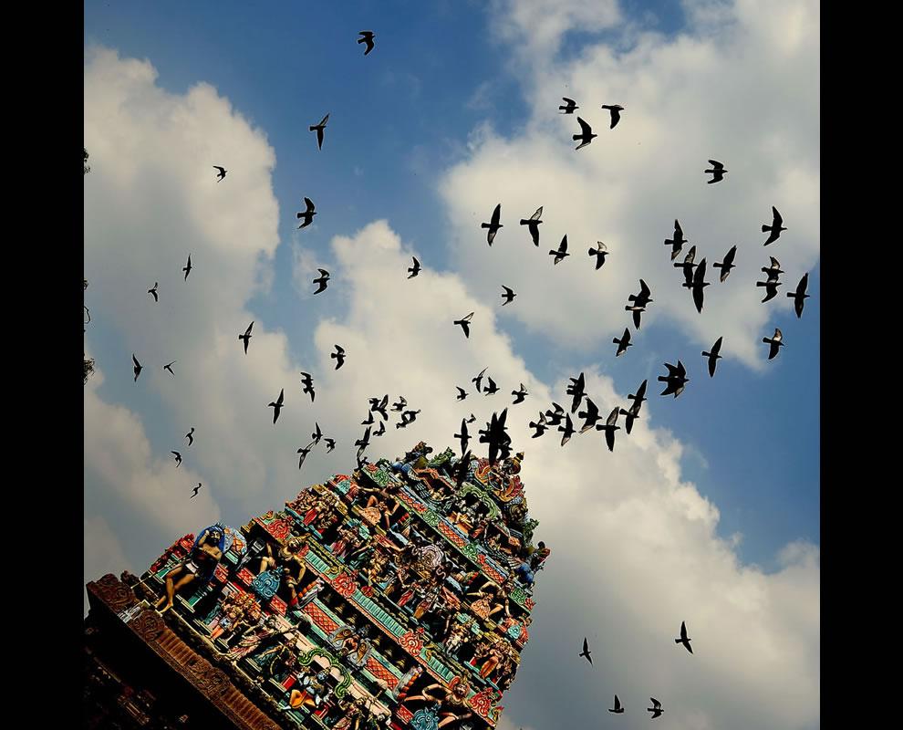 Raven Flock Birds Flock of Birds That Reside