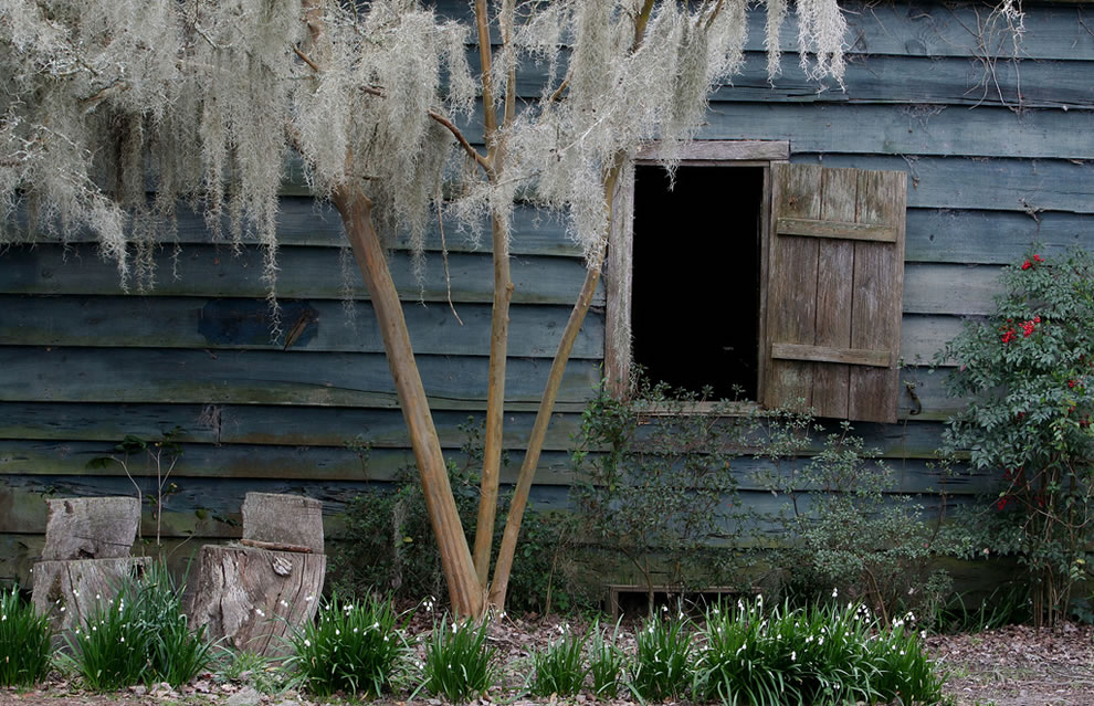 Magnolia Plantation, The old blue cabin. Two rooms, two fireplaces, and pecky cypress siding