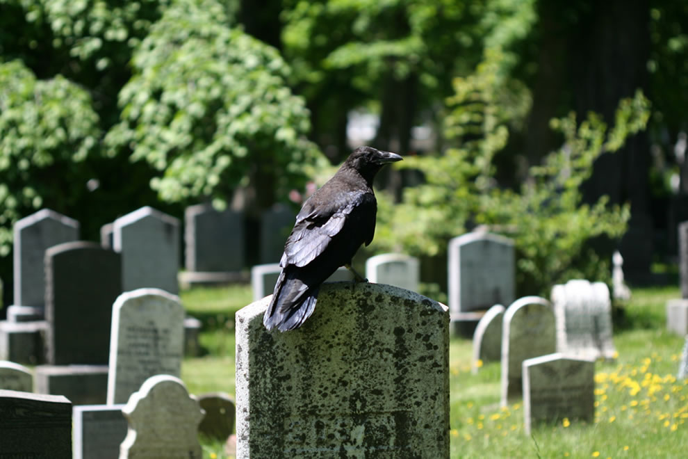 Poe's The Raven on tombstone in graveyard