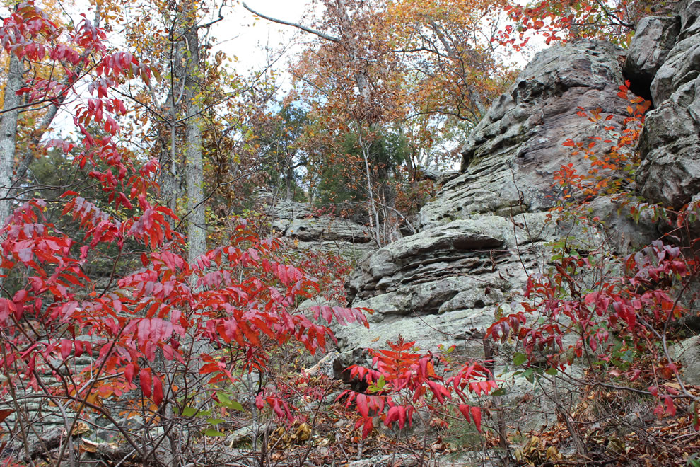 Red foliage, autumn at Garden of the Gods southern IL