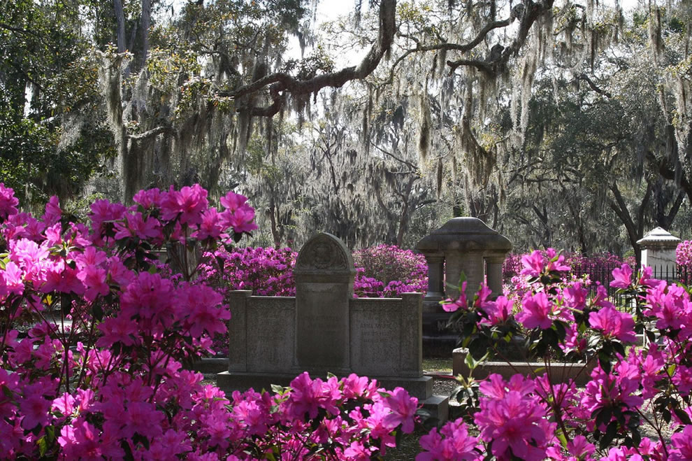 Serenity and Spanish moss at Bonaventure Cemetery at Savannah, Georgia