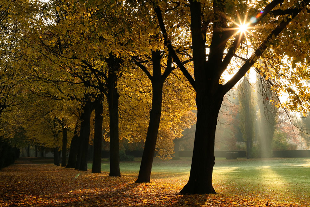 Softly as in a morning sunrise, autumn at Bonn, North Rhine-Westphalia in Germany