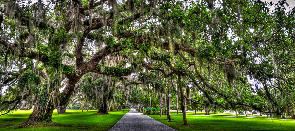 Spanish moss tree alley at Jekyll Island