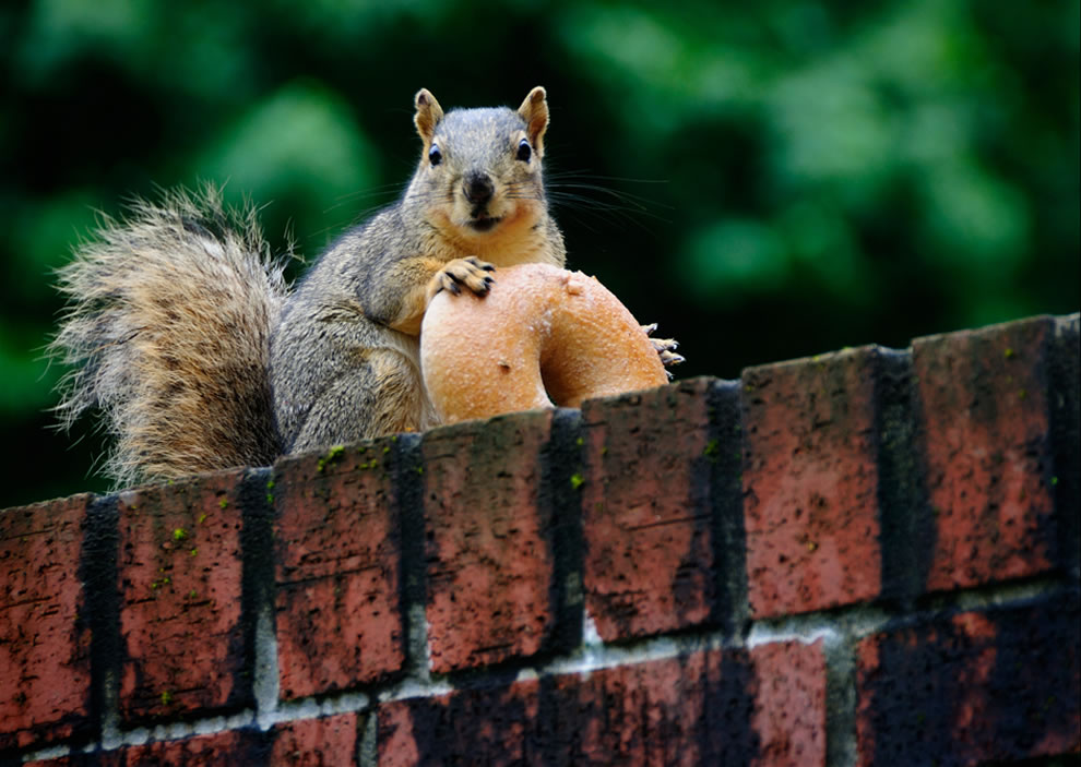 Special treat, since a squirrel cannot live on nuts alone