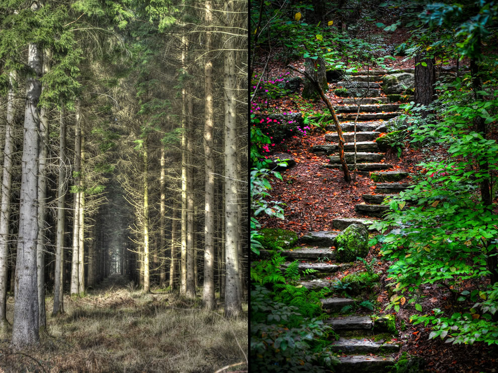 Spooky Forest of Dean, Gloucestershire & Old forest path (spooky edition)