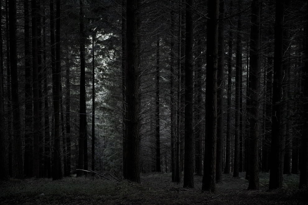 Spooky I love my forests dark, can't you tell