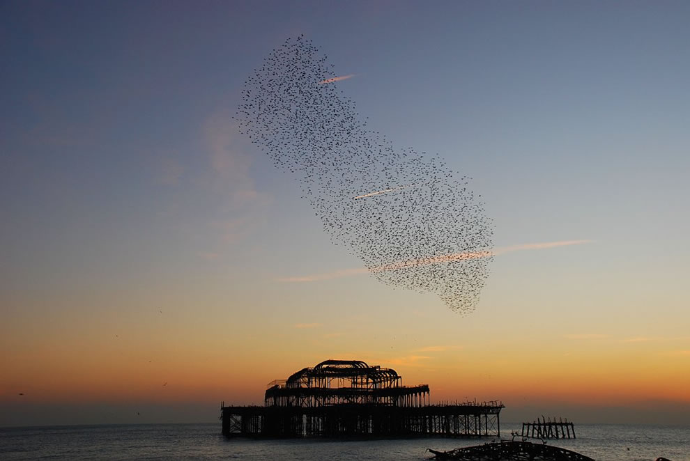 Starlings over the West Pier