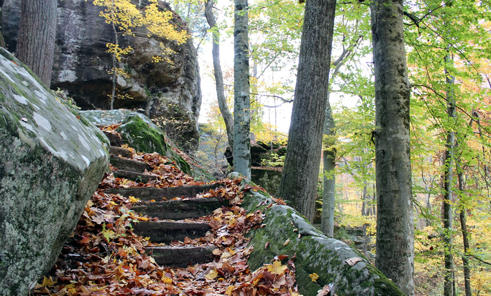 Stone steps covered in leaves to Pounds Hollow
