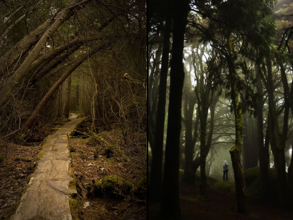 Surreal, creepy boardwalk at Blue Hills Reservation & Somewhere in the Sintra forest