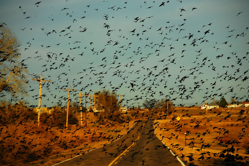 The Birds Hit the Road