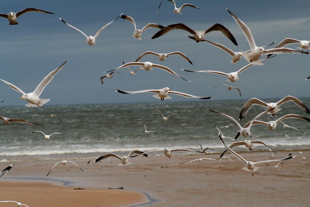 The Birds at Hitchcock's Beach