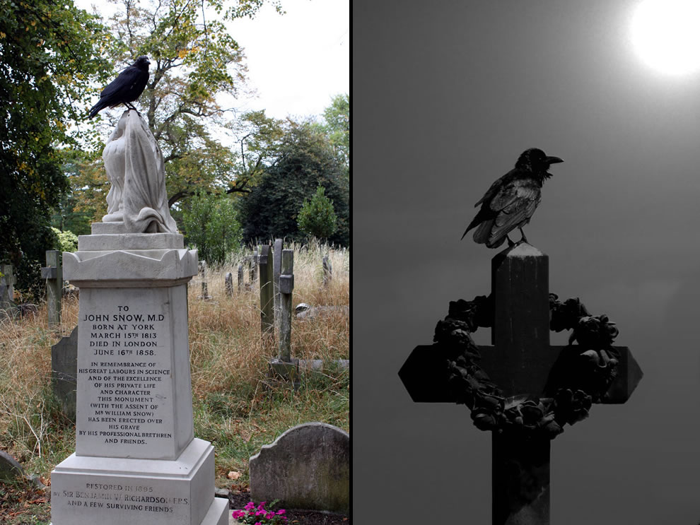 Graveyard tombstone, the raven at cemetery