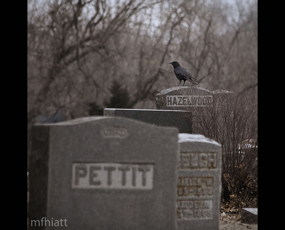 The Raven on tombstone in graveyard