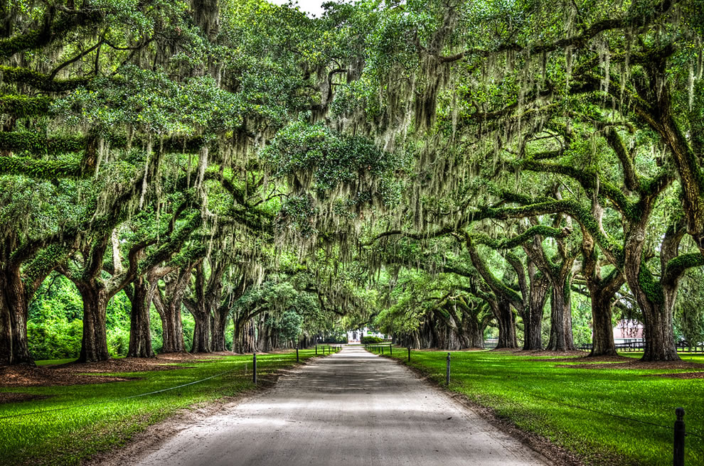 This famous avenue at Boone Hall Plantation is nearly a mile long. It is lined by about 90 oaks with Spanish moss. South Carolina