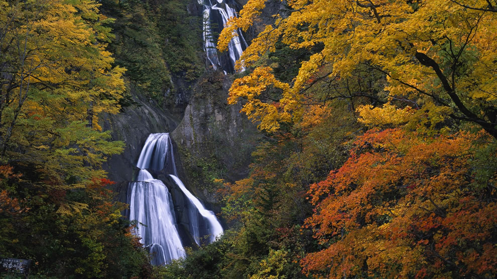Waterfall and fall forest