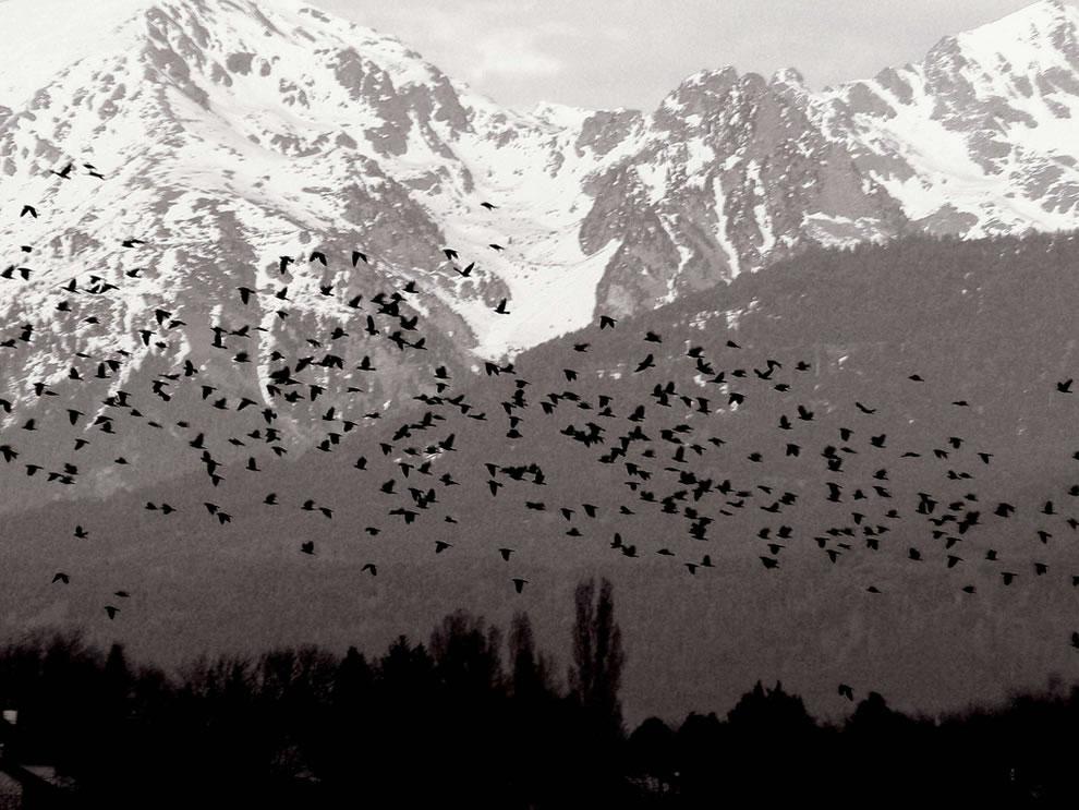 birds make a a Hitchcock atmosphere