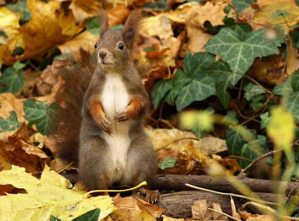 With those ears, this squirrel might be mistaken for bunny at first glance