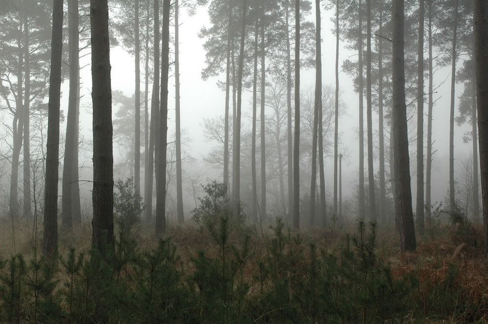 lost in mist and foggy forest in England