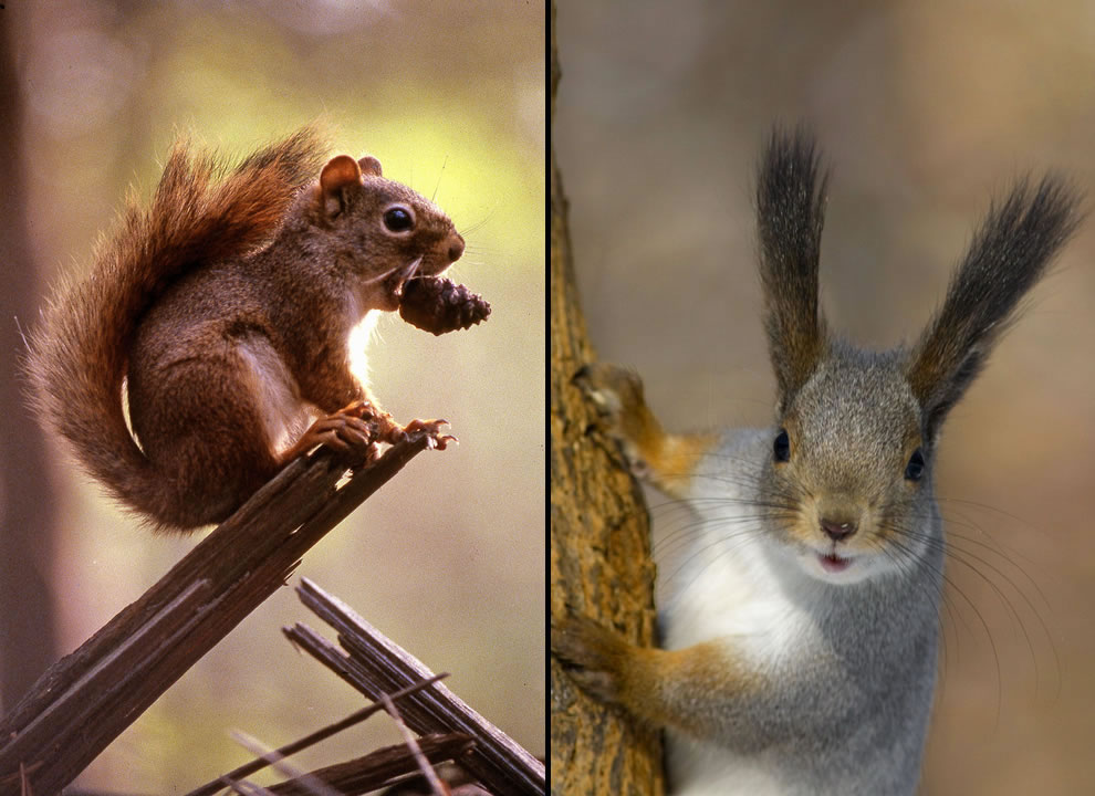 precious cute squirrels