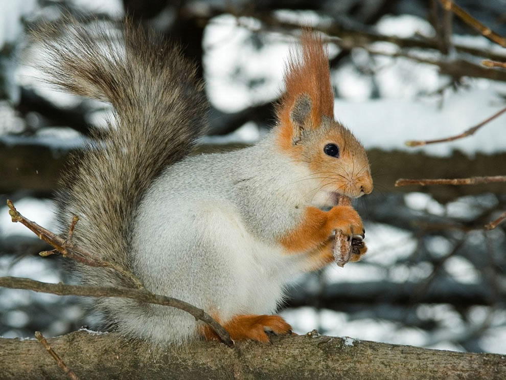squirrel white brown eating