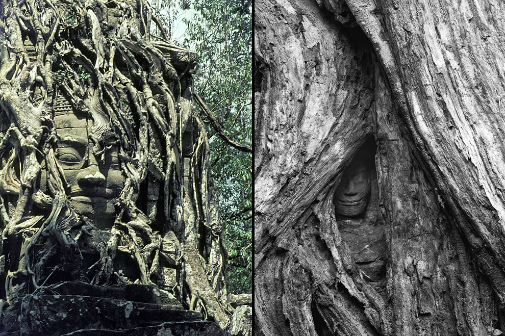Buddha being swallowed by roots at Angkor Archaeological Park