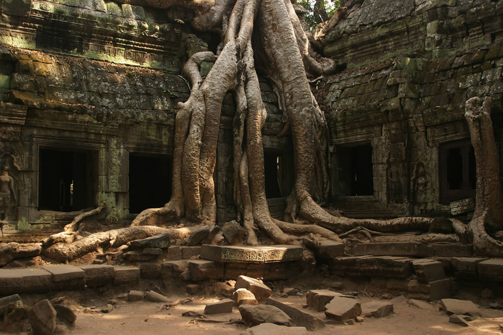 Iconic tree at Ta Prohm, Siem Reap, Cambodia