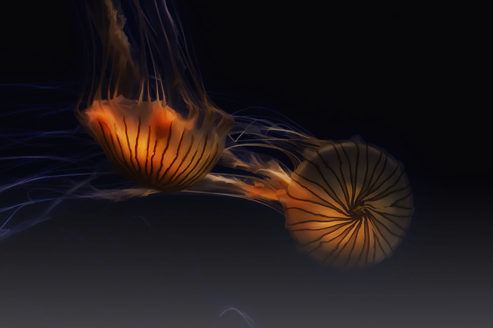 Jellyfish Dance in Light