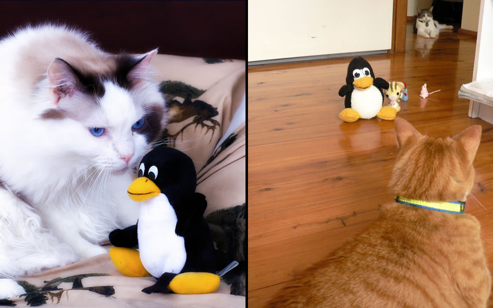 Kitties fascinated with Tux, Linux mascot