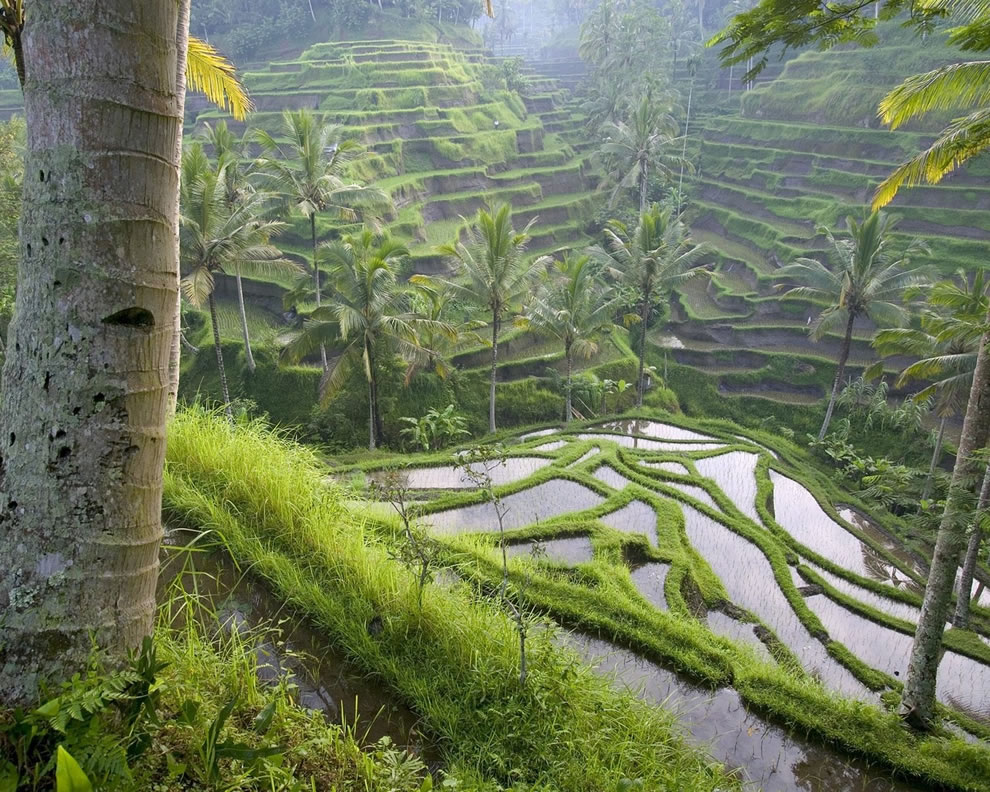 Rice terrace located near a temple