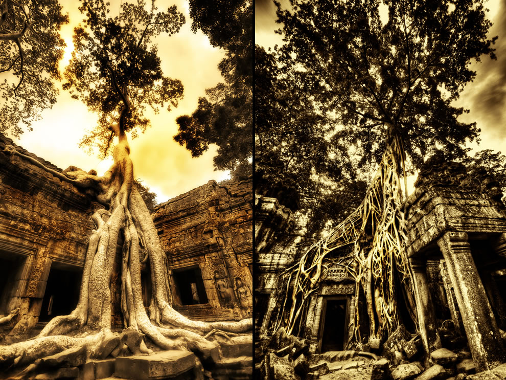 Swallowing the Ruins at Ta Prohm & Wrapping Around Time ancient ruins of Angkor Wat