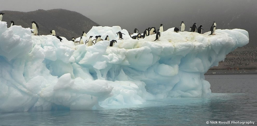 Adele Penguins on an iceberg in Antarctica