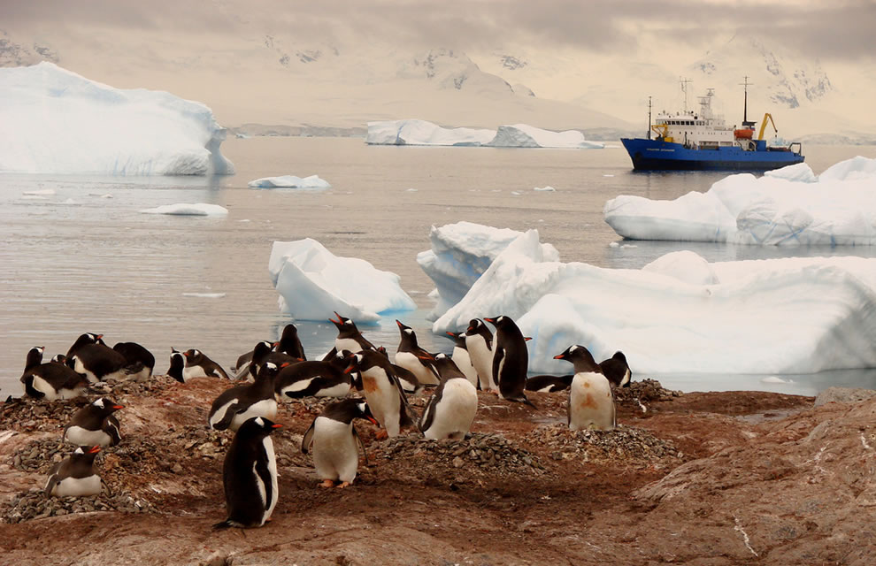 Antarctic tableau. Just another day in this magical place with penguins