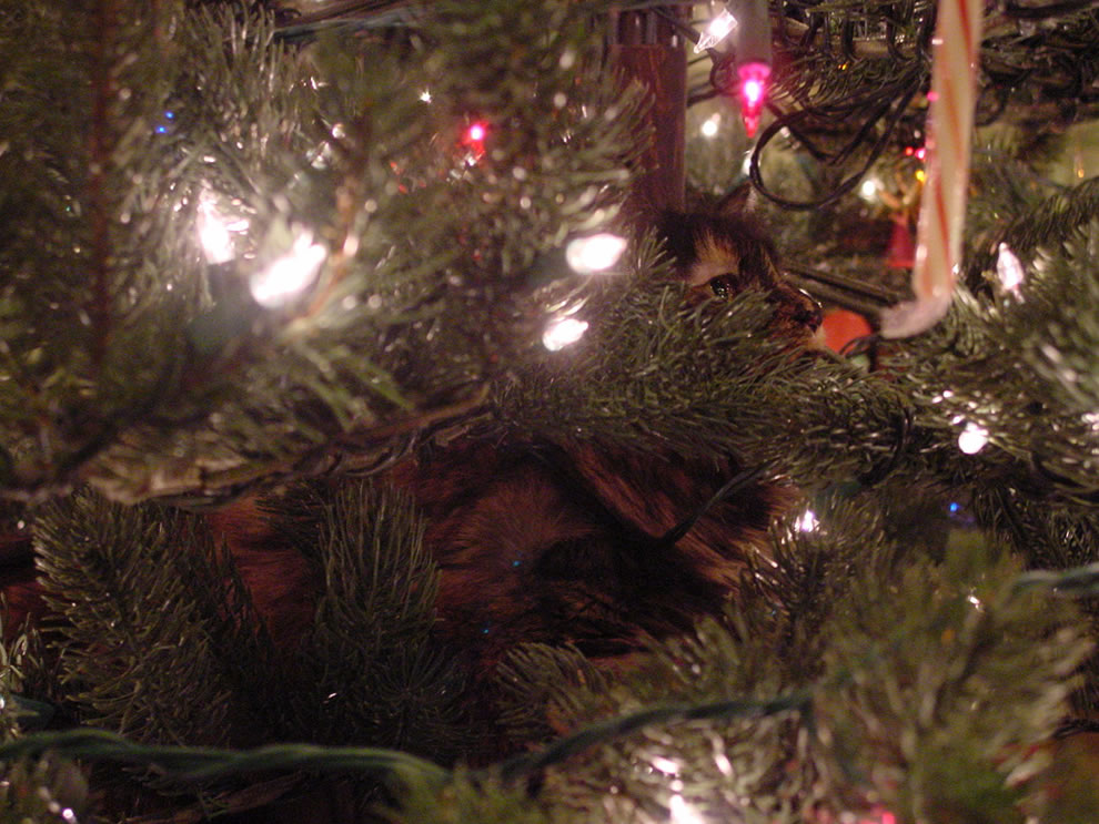 Our baddest ornament, bad kitty!