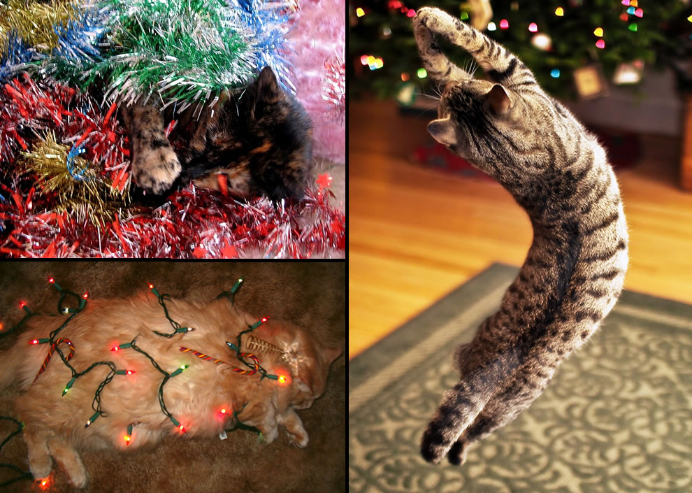 Cats in Christmas lights, tinsel and jumping around the Christmas tree