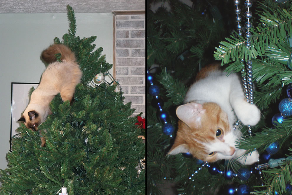 Cats up to no good in a Christmas tree