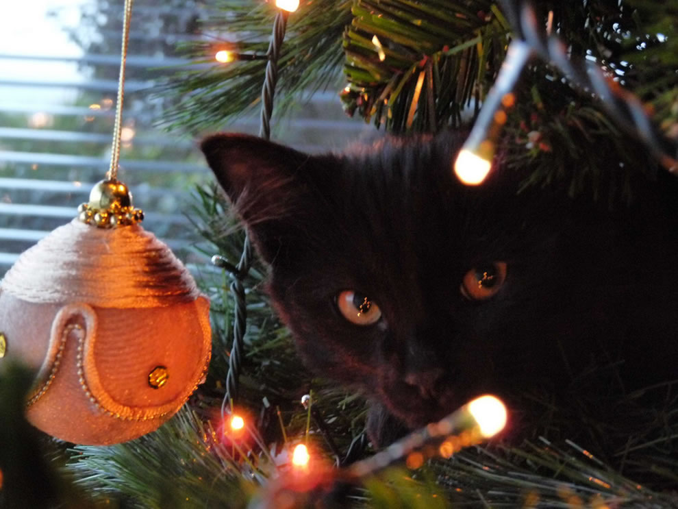 Cats In Christmas Trees [42 PICS]
