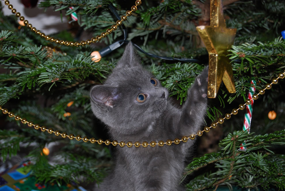 Keeping Cats Away From Christmas Tree