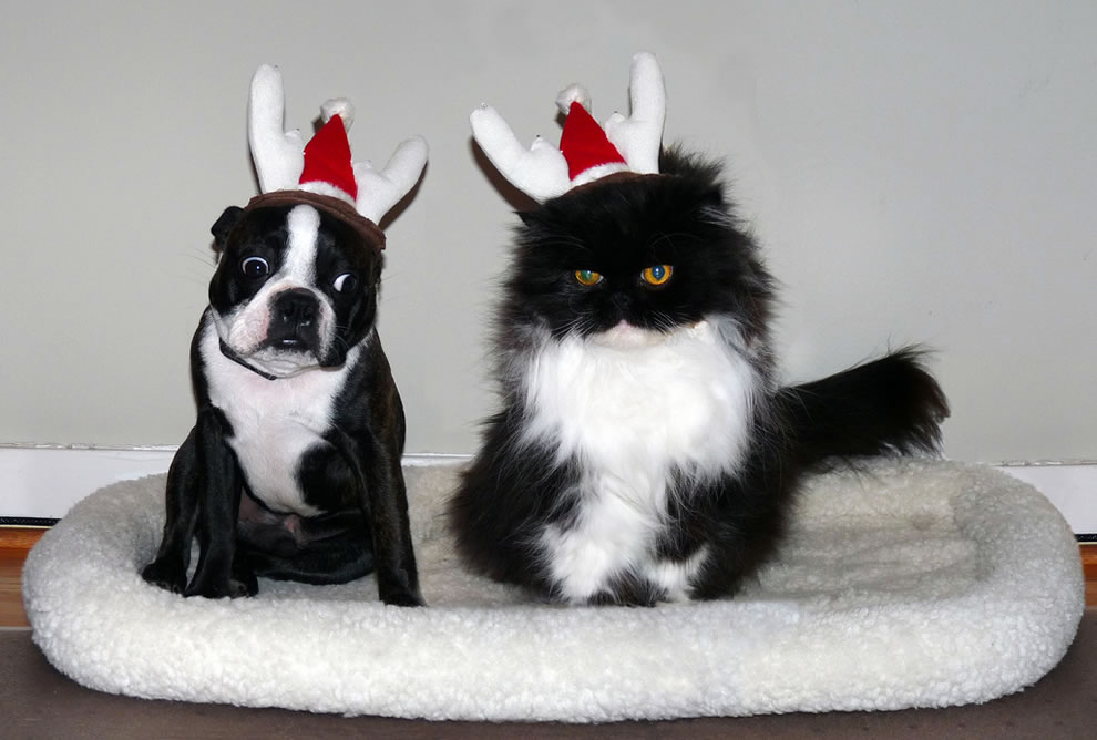 Dog - Hey, they put somethin' on my head!  Cat - You'll get used to it