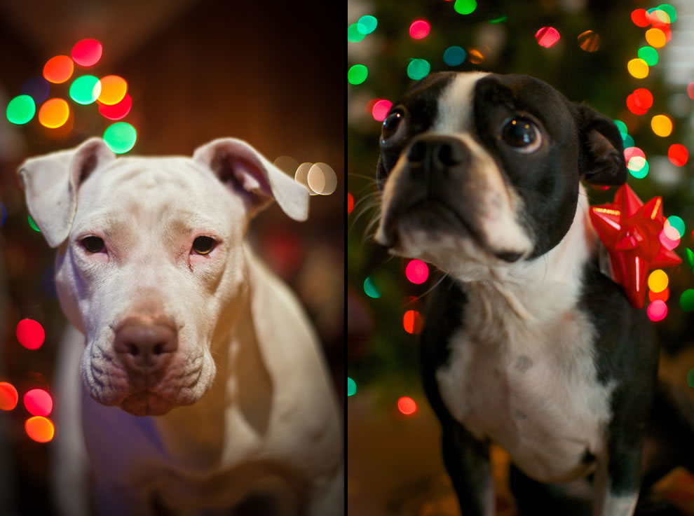 Dogs with some Christmas spirit